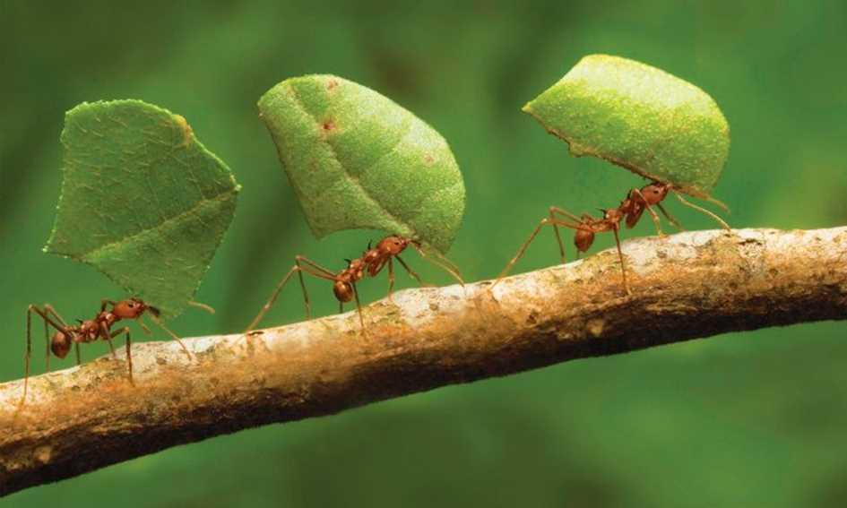 O trabalho das formigas
